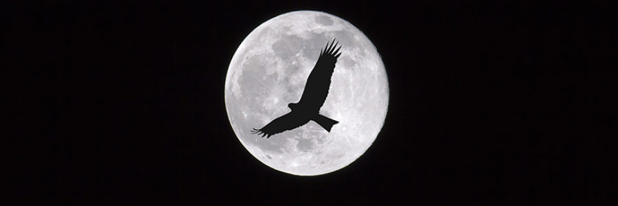 Birds flying through the moon at night, dark